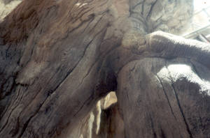 tree detail of carving by shanti1971