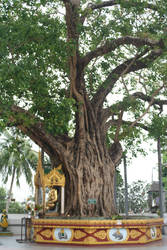 the bodhi tree shwedagon by shanti1971