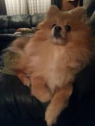 A Doge named Keko by thebannanaking