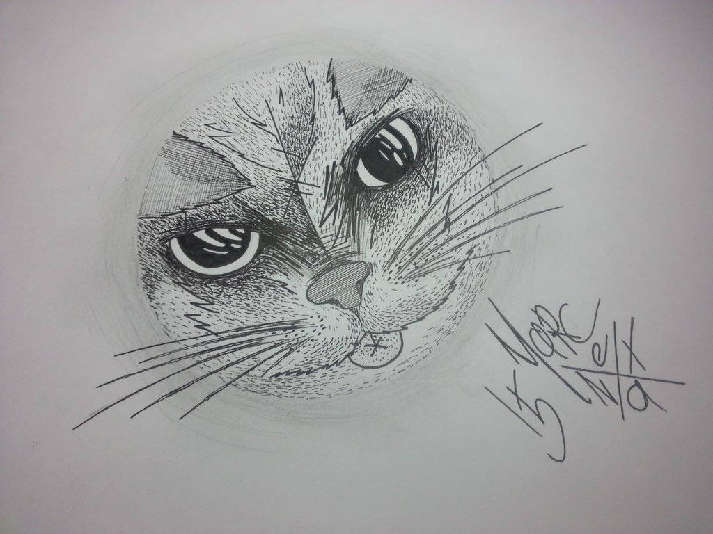 cat loop by etanist