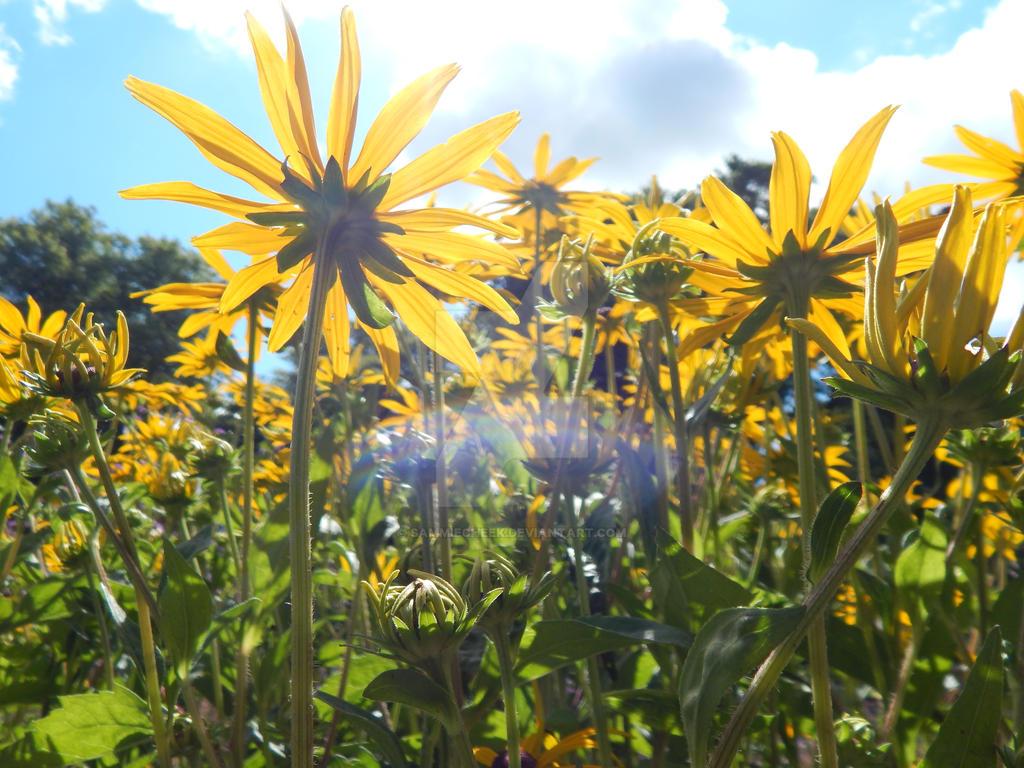 Flowers In Ireland By Sammiecheek On Deviantart