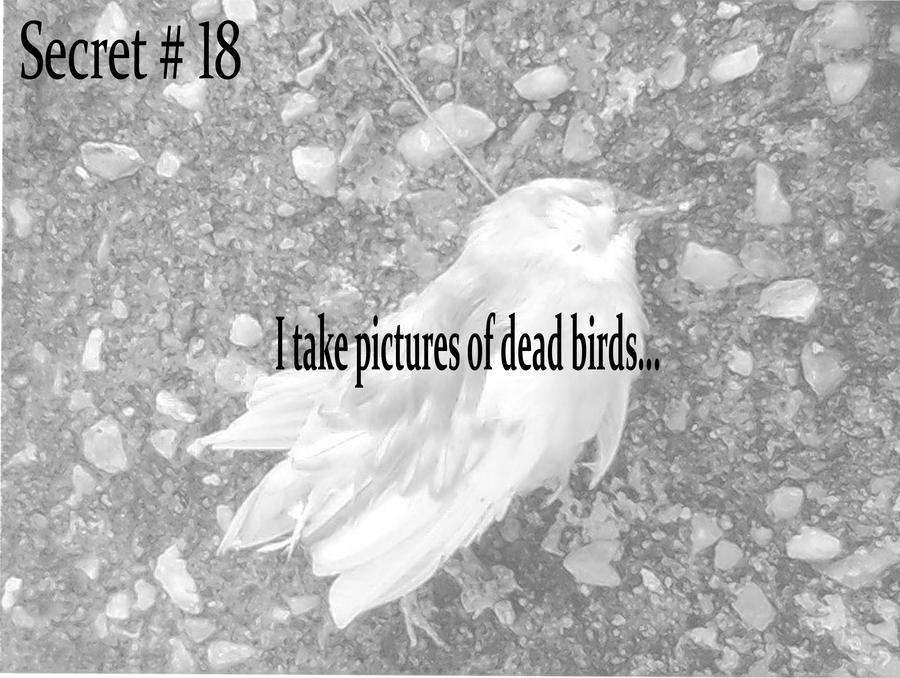 "the death of the bird by a.d.hope essay Ad hope – death of a bird published by admin on january 27, 2018 how has ad hope used language to construct meaning in ""death of the bird"" papers mkt 421."