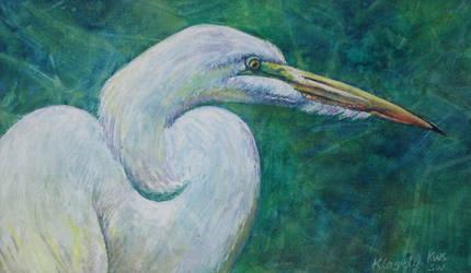 Great White Egret by k8lag