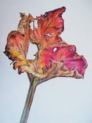 Fall Rhubarb Leaf