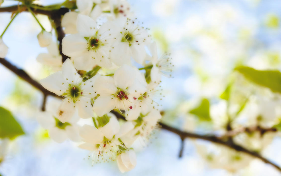 White Flowers by ryanstfu