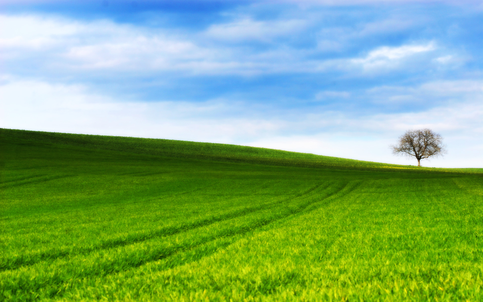 Grassy Hill by ryanstfu