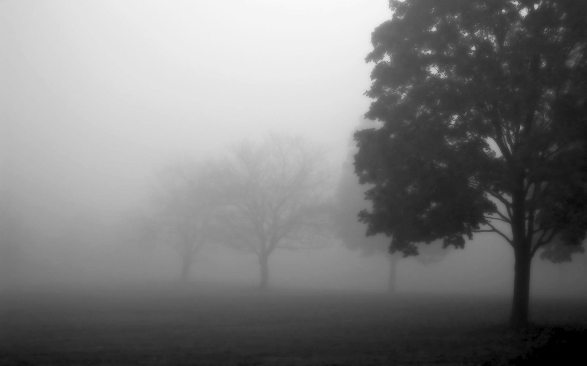 Foggy Trees by ryanstfu