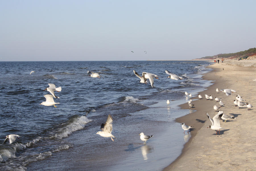 Seagulls wallpaper > Seagulls Papel de parede > Seagulls Fondos