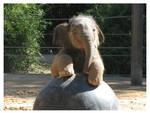 Baby Elephant Walk 2