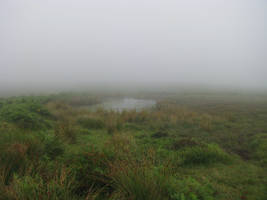 Nature 256 foggy pond by Dreamcatcher-stock