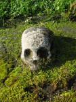 Objects 117 skull