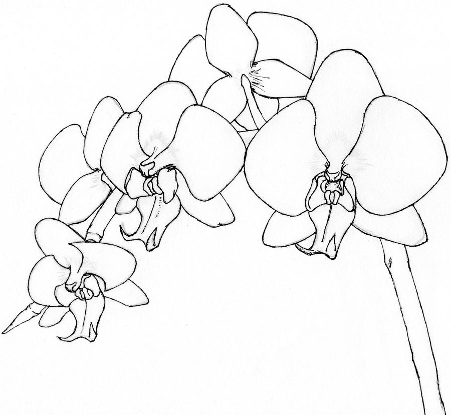 Orchid Flower Line Drawing : Orchids uncolored by mfungiz on deviantart