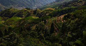 Rice Valley