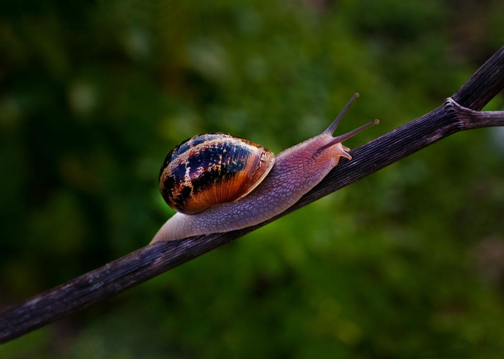 Snail by davidsant