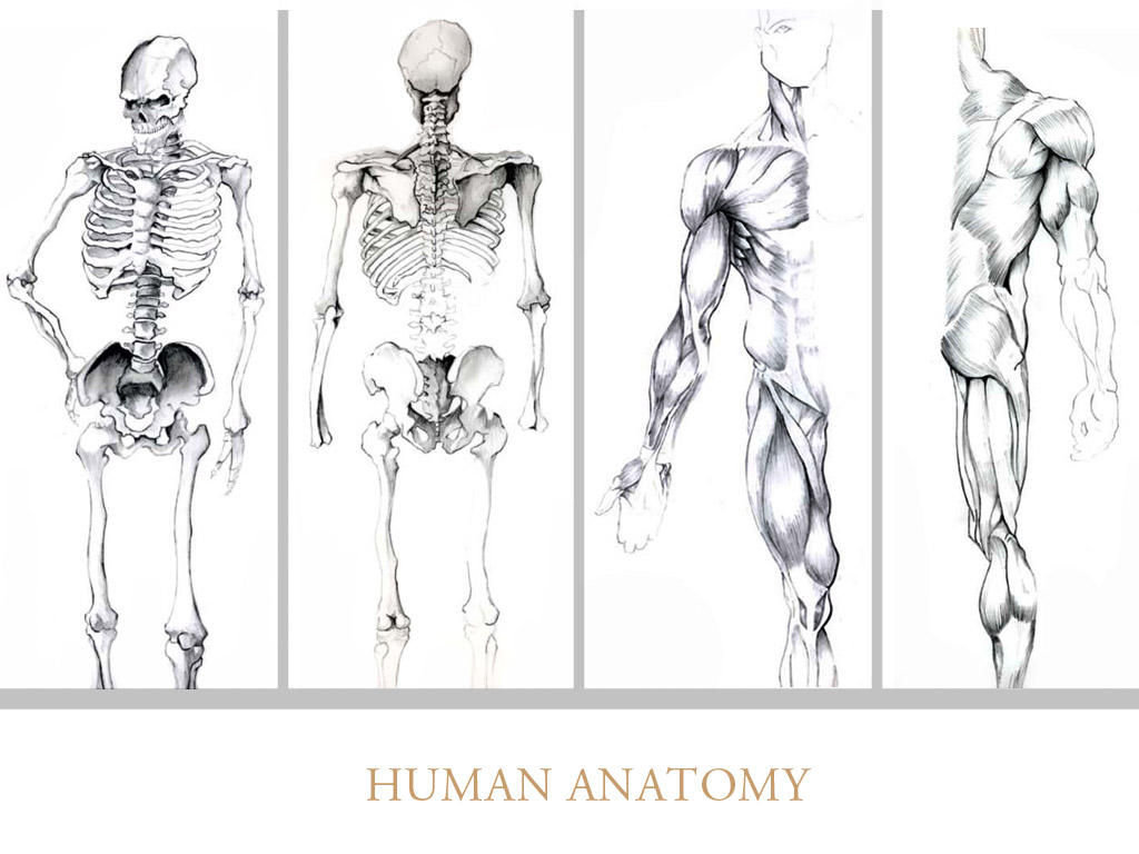 Drawing of anatomy