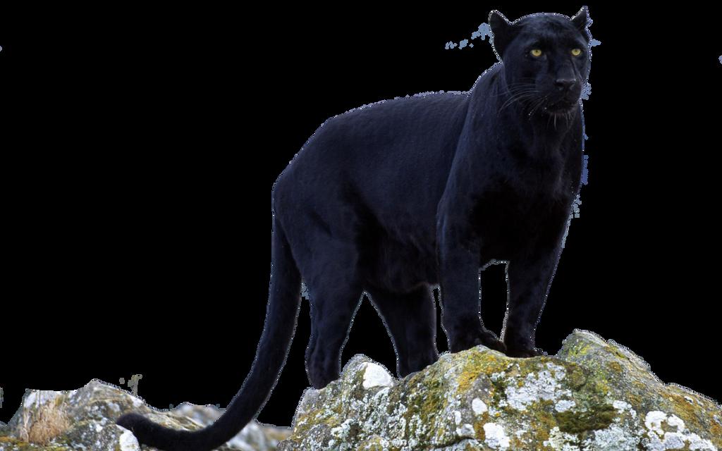 Black Panther transparent by darksoulforver9 on DeviantArt