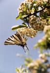 Oh my Butterfly by Feelin3