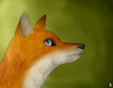 My first fox :')