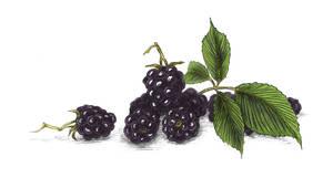 Haute Confiture Preserves - Blackberry
