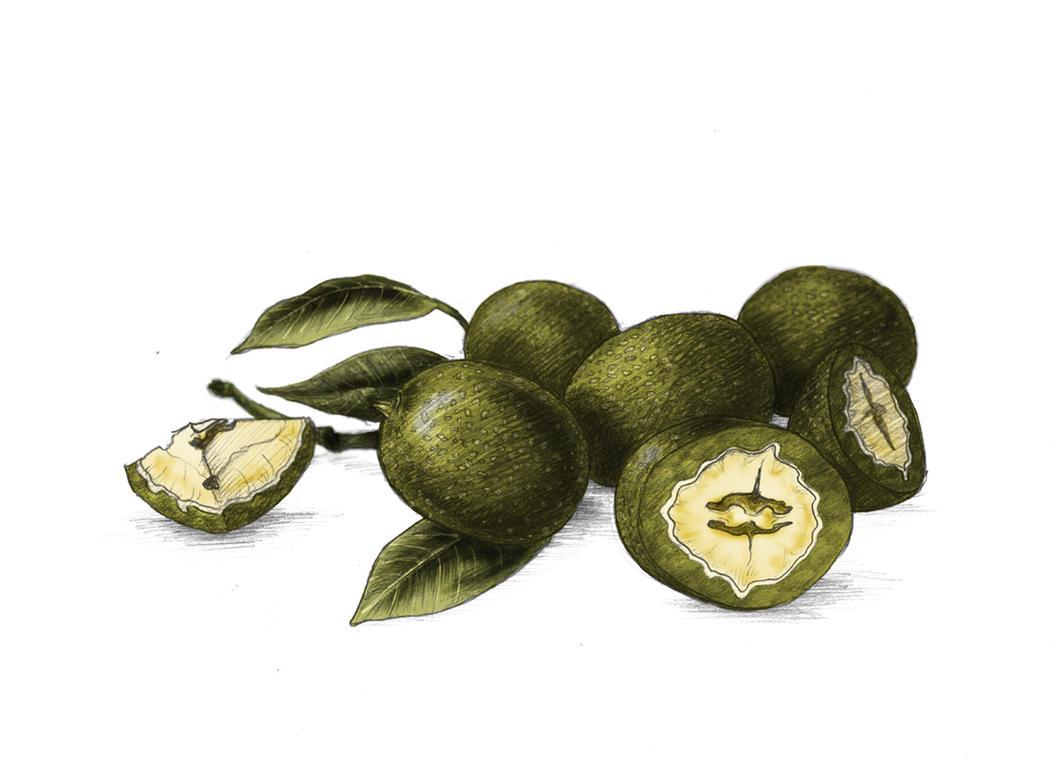 Haute Confiture Preserves - Green Walnuts by heranush