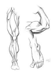 Anatomy Studies: Leg, Arm, Foot