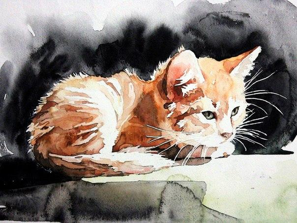 kitten by ElenaShved