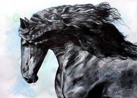 Friesian Horse at Black big by ElenaShved