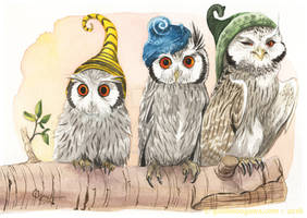 Strange White-Faced Owls