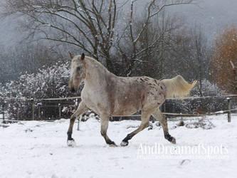 Snow II by ColdRuru