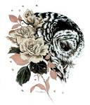 Owl's Pascali