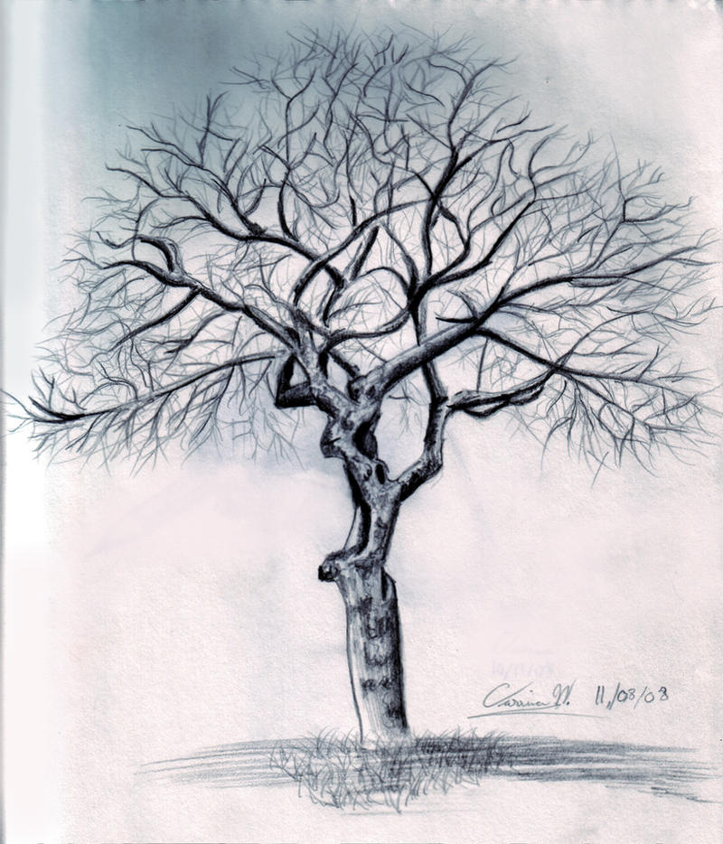How to draw Tree_without_leaves
