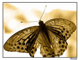Butterfly by sh4dow