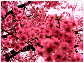 Pink Flowers by OATStheman