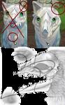 Canine Skull Texture
