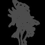 Dark Magician Girl Lineart by xArtti