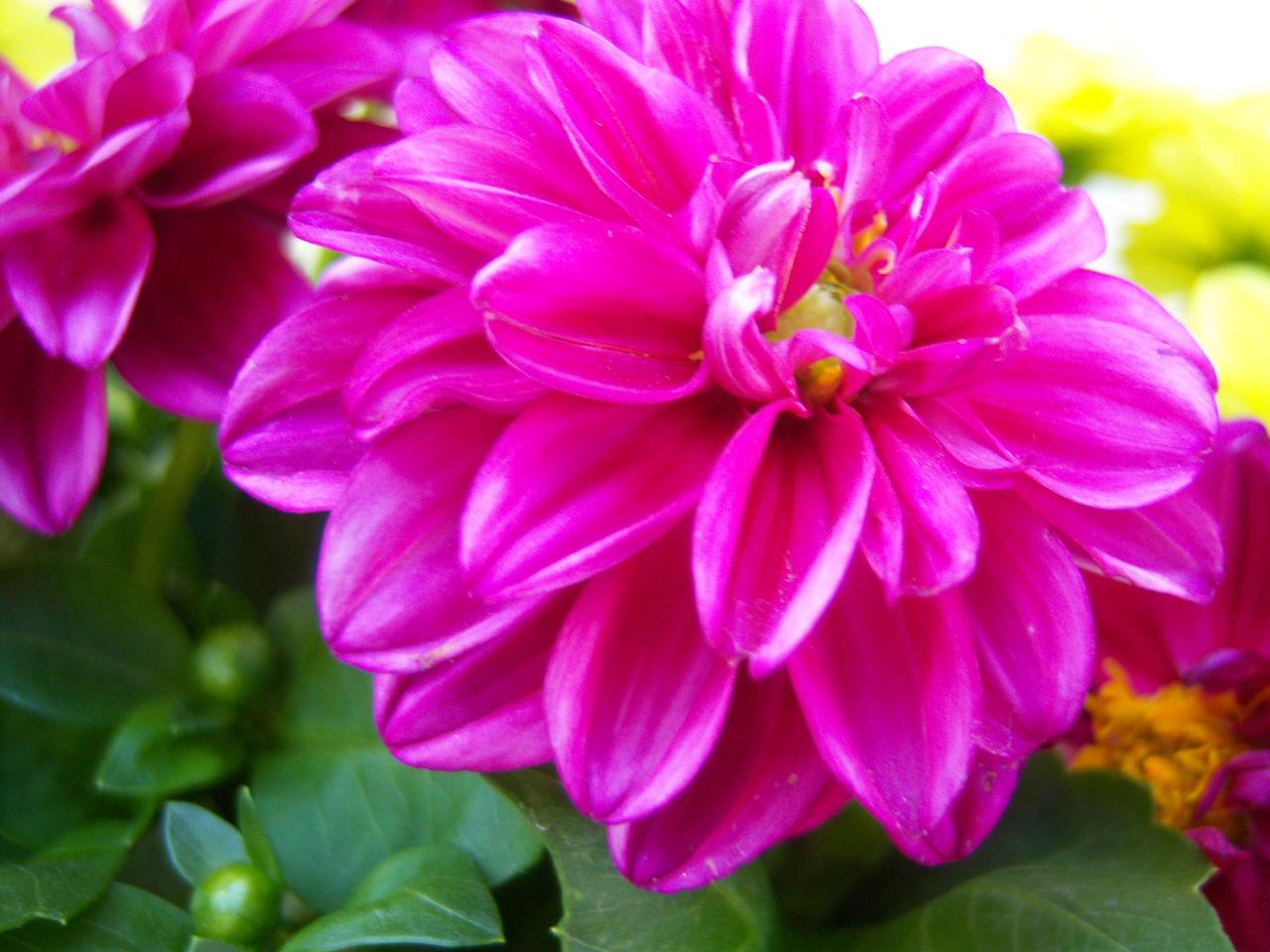 A Fuschia Flower by Godanna on DeviantArt