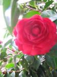 a flowers beauty