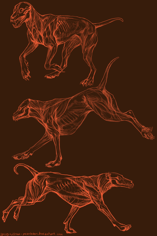Canine Motion Anatomy by Exileden on DeviantArt