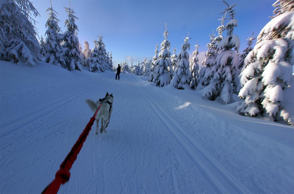 Skijoering by Exileden