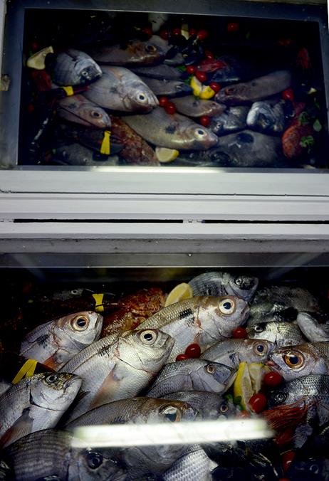 Fisches by Exileden