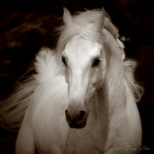 Sepia Horse by vadalein on DeviantArt  Sepia Horse by ...