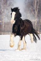 winter XV by vadalein