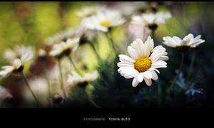 Flowers by vadalein