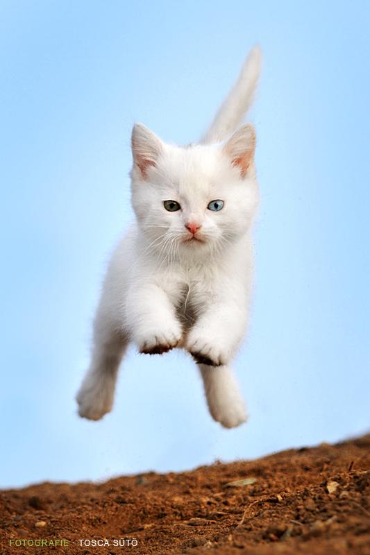 action kitten by vadalein