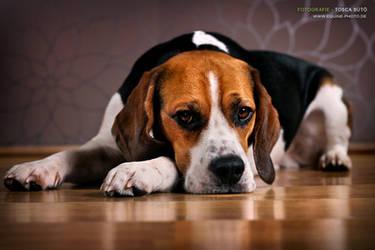 My Beagle Sir Eddy by vadalein