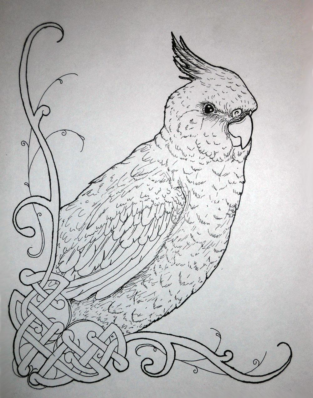 cockatiel bird coloring pages - photo#12