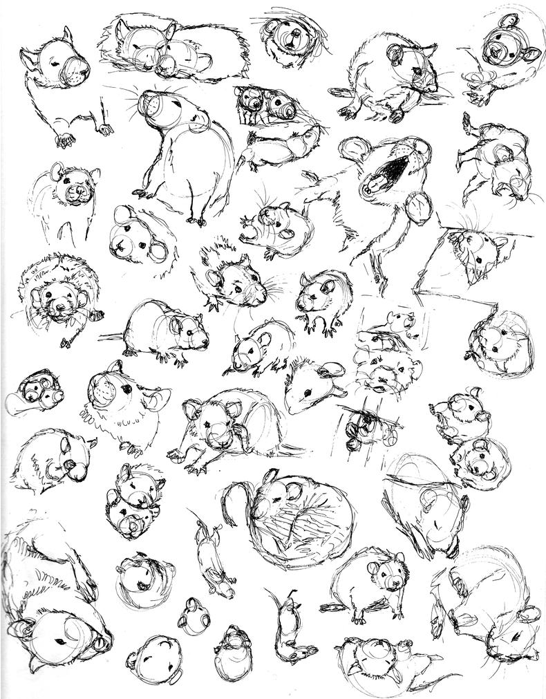 Line Drawing Rat : Rat sketch practice by never mor on deviantart