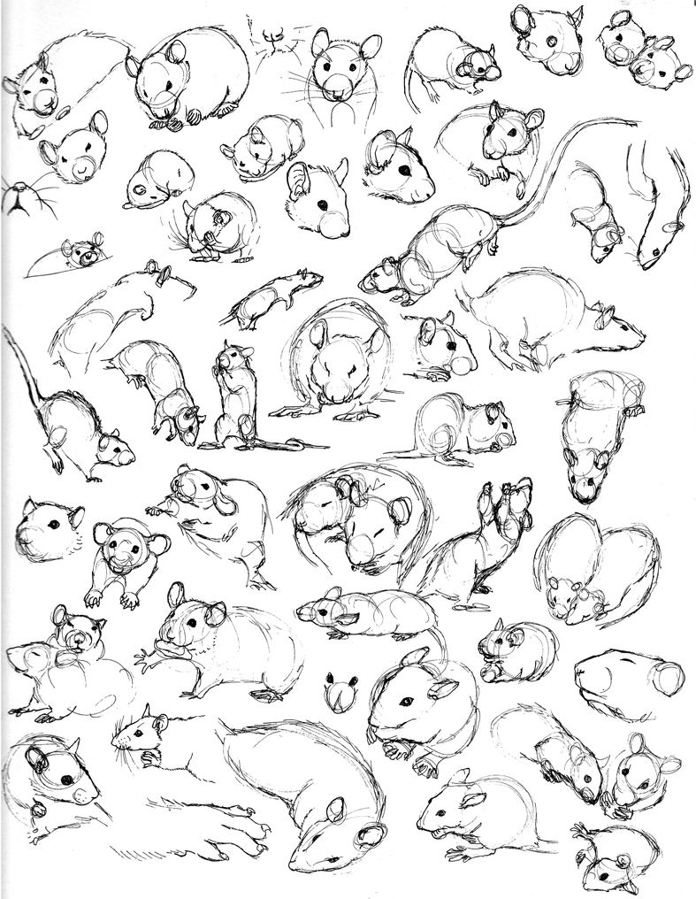 Uncategorized How To Draw Rats rat sketch practice 5 by never mor on deviantart mor