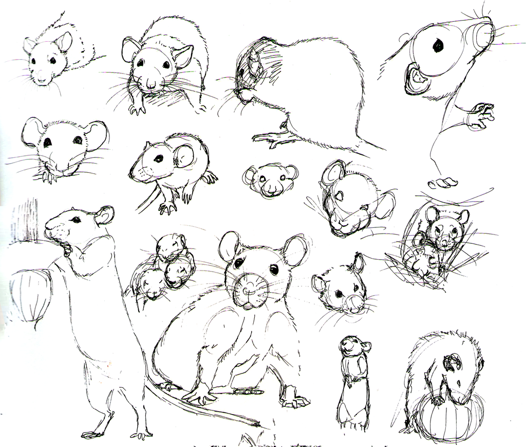 Uncategorized How To Draw Rats rat practice 10 by never mor on deviantart mor