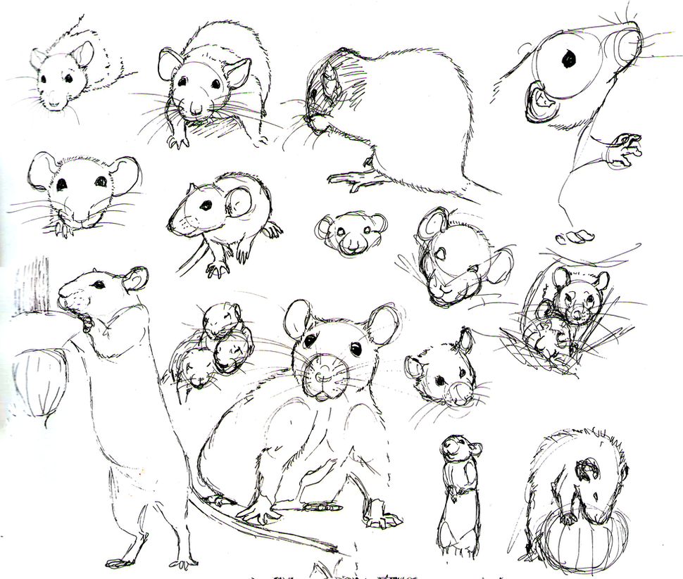 how to draw out a mouse